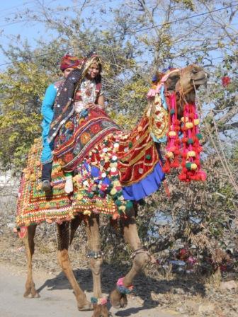 Camel in Chittorgarh