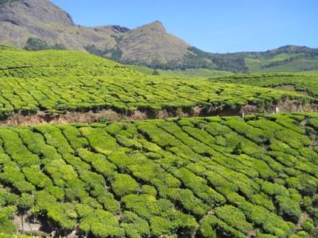 Patterns in Tea