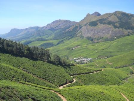 Tea Estate, Kerela