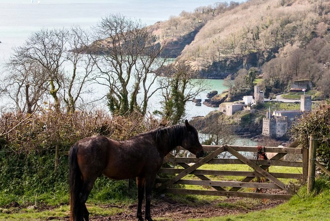 Horse and castle view