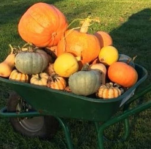 Pumpkin Harvest - How to use them in your woodfired oven